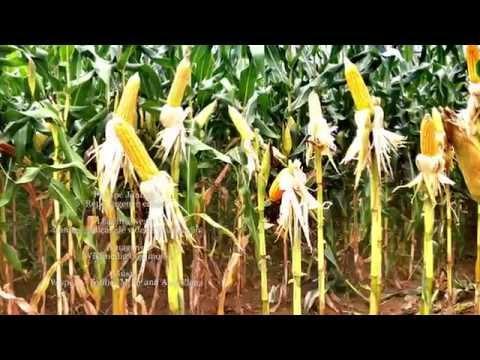 0 Plantas brasileiras podem ajudar a enfrentar impactos das mudanças climáticas