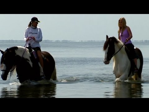 Horseback riding on the beach with 'C Ponies'