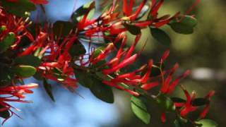 Watch this short film to learn more about the MyBiodiversity Film competition, brought to you by the Canterbury Regional Biodiversity Coordinator and Environment Canterbury.