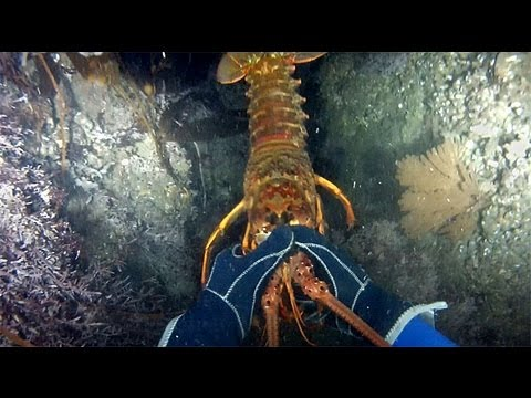 戴著GoPro,在海中用手抓龍蝦