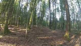 Chasse En Battue Dans Les Vosges Sangliers Chevreuils Cervidés