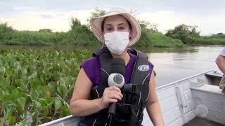 Água no Planeta: Pantaninho será  atração turística em Ibitinga