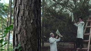 SBS 일요특선 다큐멘터리 115회 20170813 SBS현신규 박사가 탄생시킨 세계 세 번째 성공 우량 교잡종 나무, 리기테다 소나무는 한국 기적의 소나무라고 불린다. 추위와 병충에 강해 목재로 쓰기 좋은 우량종 소나무 리기테다를 함께 찾아가보자.홈페이지: http://program.sbs.co.kr/builder/programMainList.do?pgm_id=22000003708