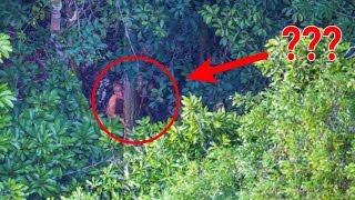 Video Fotografer ini tak sengaja menangkap pemandangan mengejutkan di pedalaman hutan MP3, 3GP, MP4, WEBM, AVI, FLV Juni 2017