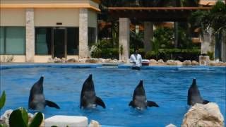 Our visit to the Grand Bahia Principe Coba was filled with fun! Check out a day at this beautiful resort with the Wise's!