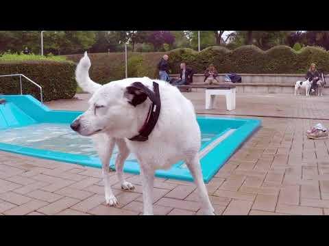 Iserlohn: Erstes Hundeschwimmen im Heidebad