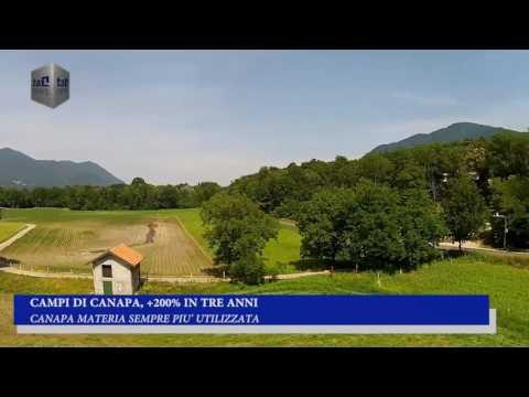 CAMPI DI CANAPA, +200% IN TRE ANNI