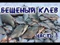 Бешеный клев леща  Подводное видео Часть 1