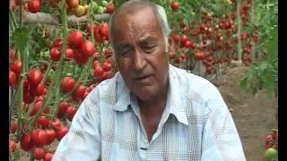Video Agriculture Development .... in Nepal .... MP3, 3GP, MP4, WEBM, AVI, FLV November 2018