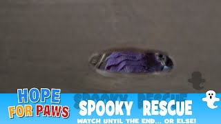 Spooky rescue - watch until the end... or else! by Hope For Paws