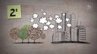 WWF-Brasil &#8211; Programa Madeira é Legal<br/>Mudanças climáticas