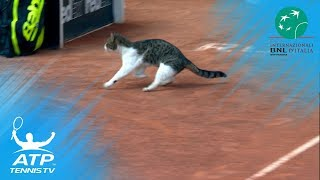 猫がテニスの試合に乱入した…コートを横切る素早い影(動画)
