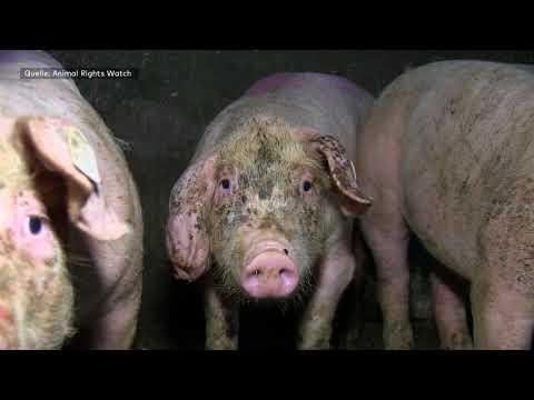 Tierschützer vor Gericht: Prozess um Hausfriedensbruch  ...
