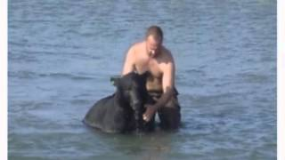 Video Man Saves A 375 Pound Black Bear From Drowning MP3, 3GP, MP4, WEBM, AVI, FLV Agustus 2017