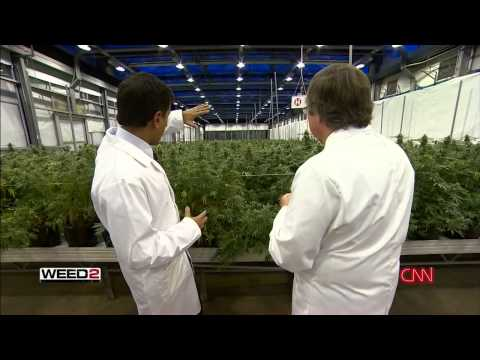 WEED 2 Cannabis Madness Dr Sanjay Gupta Reports Full HD