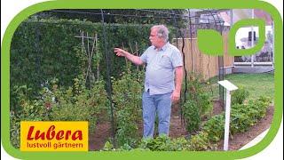 Fruit Cages – so schützt man Beerensträucher in England effizient vor Vogelfrass