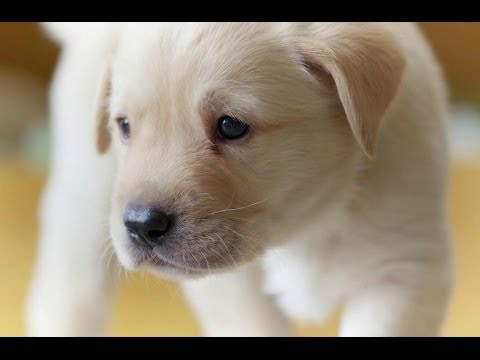 Puppy opens its eyes for the first time – Puppy Senses – The Secret Life of the Dog – Horizon – BBC