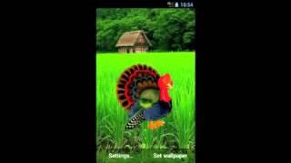Thanksgiving turkey wallpaper YouTube video