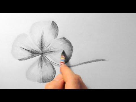 Klee, zeichnen im Zeitraffer (Clover, drawing in fast motion)[HD]