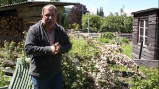 #643 Wie schneide ich einen Perlmuttstrauch - Kolkwitzia amabilis