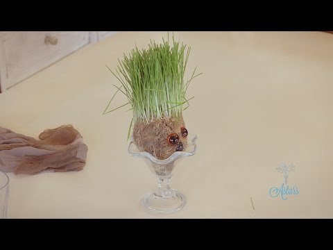 How to Make a Wheatgrass Head