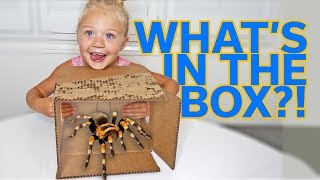 Video EXTREME WHAT'S IN THE BOX CHALLENGE!!! MP3, 3GP, MP4, WEBM, AVI, FLV Agustus 2018