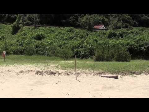スノーケルをしに島根県の笹子ビーチに行きたい!