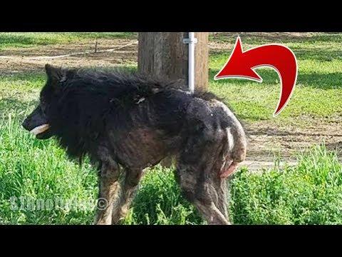 """La gente piensa que el es un """"Hombre lobo"""", entonces una mujer se acerca y descubre la verdad (видео)"""