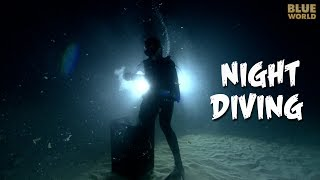In this exciting episode of Jonathan Bird's Blue World, Jonathan explains why night diving is so much fun and so popular with scuba divers.  Far from being scary, it's actually an amazing experience to see the kind of nocturnal animals that come out of hiding at night.JONATHAN BIRD'S BLUE WORLD is an Emmy Award-winning underwater science/adventure program.**********************************************************************If you like Jonathan Bird's Blue World, don't forget to subscribe!Support us on Patreon!http://patreon.com/BlueWorldTVYou can buy some Blue World T-shirts & Swag!http://www.blueworldtv.com/shopYou can join us on Facebook!https://www.facebook.com/BlueWorldTVTwitterhttps://twitter.com/BlueWorld_TVInstagram@blueworldtvWeb:http://www.blueworldTV.com**********************************************************************