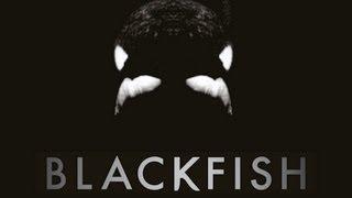 Nonton Blackfish   Killer Whales At Seaworld Documentary Maker Gabriela Cowperthwaite Film Subtitle Indonesia Streaming Movie Download