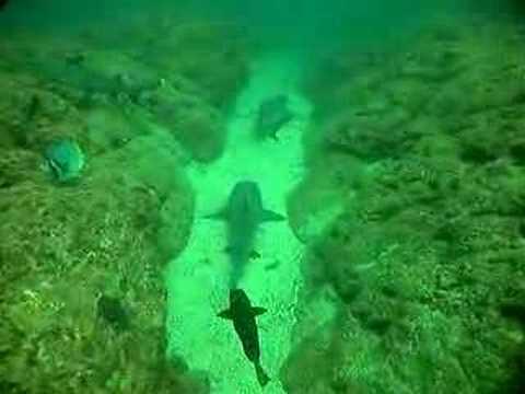 Buceo en la isla de Catalina (Costa Rica)