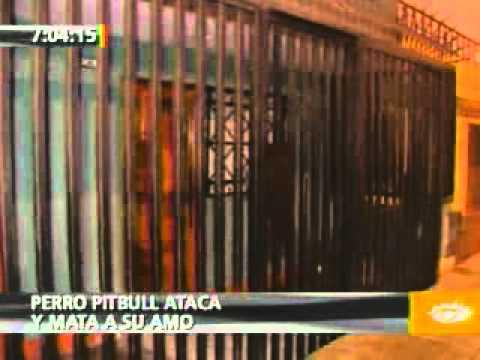 PRIMERA EDICION 14-11-2011 PERRO PITBULL ATACA Y MATA A SU AMO
