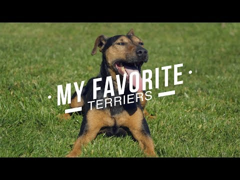 MY FAVORITE TERRIER BREEDS