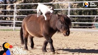 Dog Rides Her Mini Horse Everywhere | The Dodo Odd Couples by The Dodo
