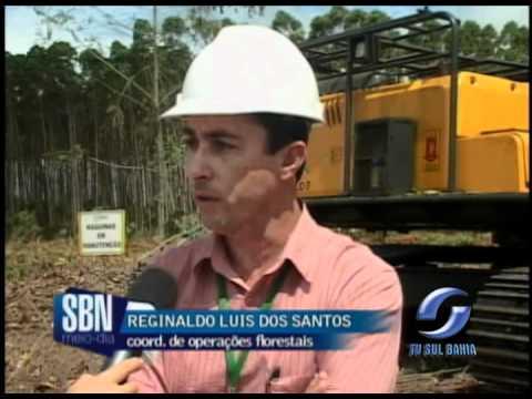 Reportagem exclusiva da TV Sul Bahia fala da Engenharia Florestal
