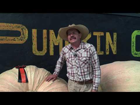 How To Grow a Giant Pumpkin!