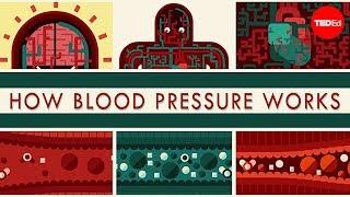 How blood pressure works – Wilfred Manzano