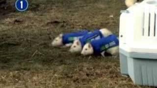1-800-Got-Junk Rat Advertising Trial.