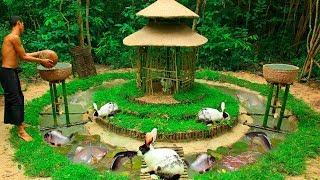 Feed Beautiful Wild Rabbit and Build Fish Pond For Catfish around Castle Mud Rabbit House