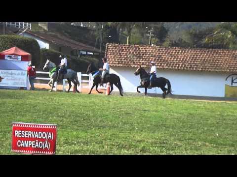 Tamoyo Morro Grande da Zizica ( Campeão Cavalo Adulto de Marcha - Copa Rio Interfazendas 2011)