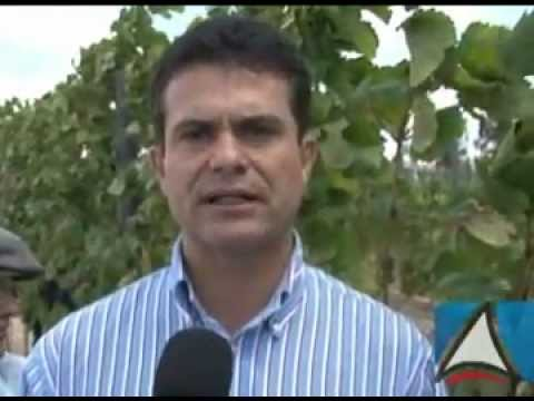 Morro do Chapéu se prepara para ser mais um polo da produção de uvas na Bahia