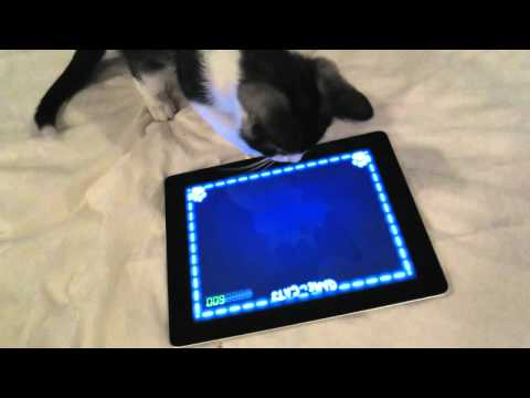Kitten plays game on iPad