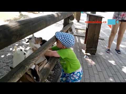 Jak se LÍBAJÍ italské kozy