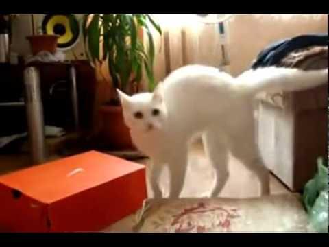 Wacky Walking Cat - Not Again!!