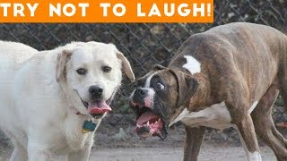 Video Try Not To Laugh At This Ultimate Funny Dog Video Compilation | Funny Pet Videos MP3, 3GP, MP4, WEBM, AVI, FLV Juni 2018