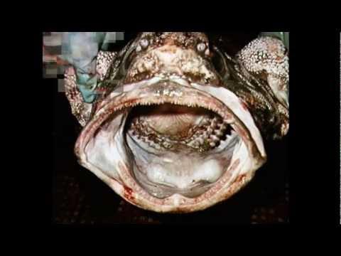 Criptozoologia Monstruos y Criaturas extrañas mar
