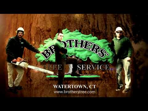 Video for YouTube and website for business Brother's Tree Watertown