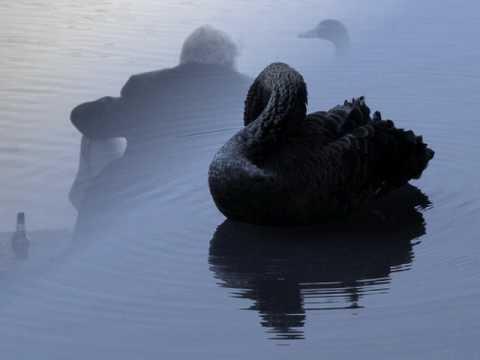 , title : 'Lacrimas Profundere - Black swans'