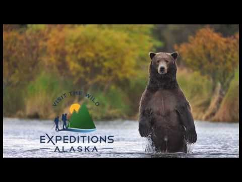 Alaska Grizzly bear photo tour