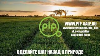 Как работают PiP средства с Пробиотиками и что такое биоплёнка?